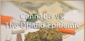 Medical Marijuana vs Opioid Epidemic